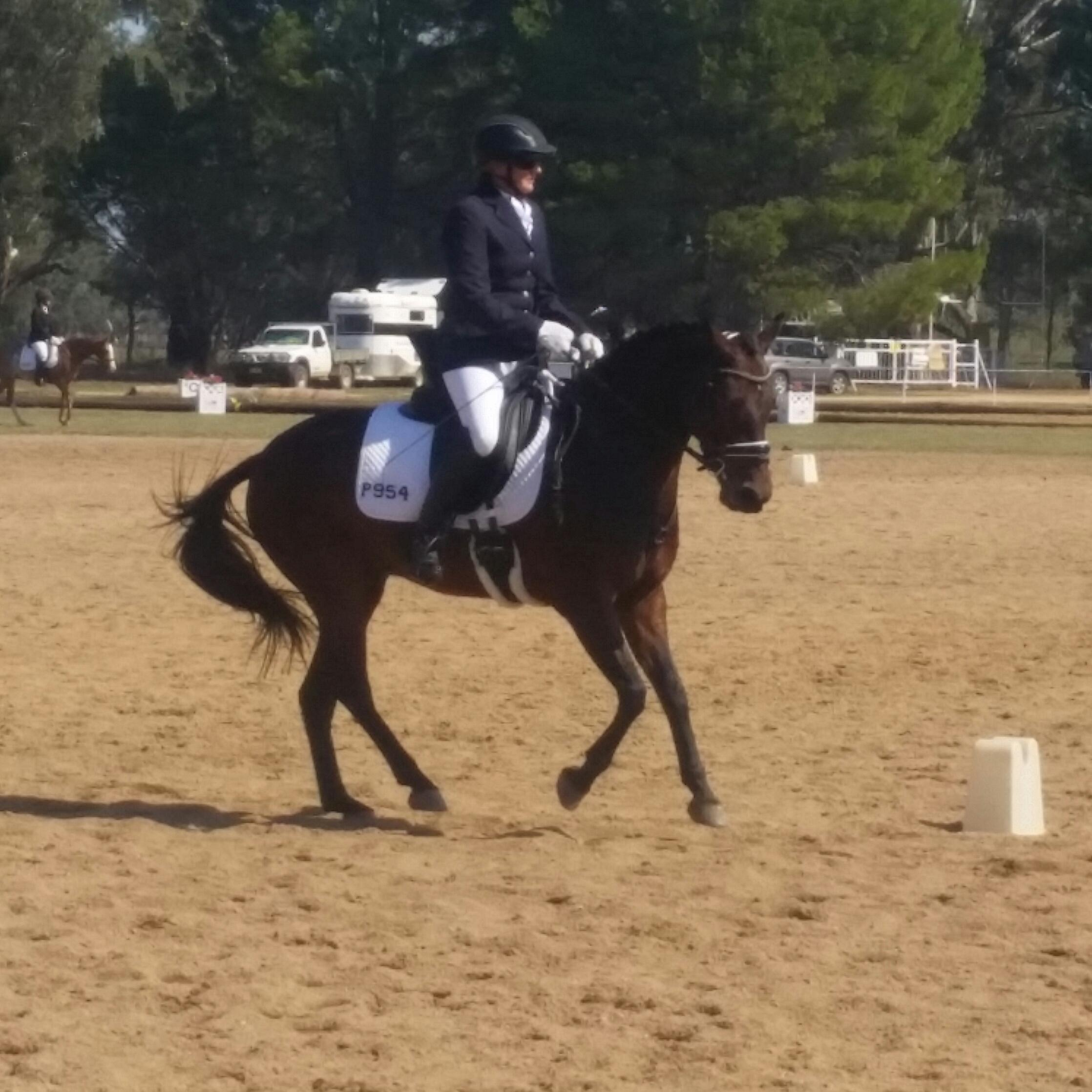 Competitive EA Dressage Pony- lease or buy