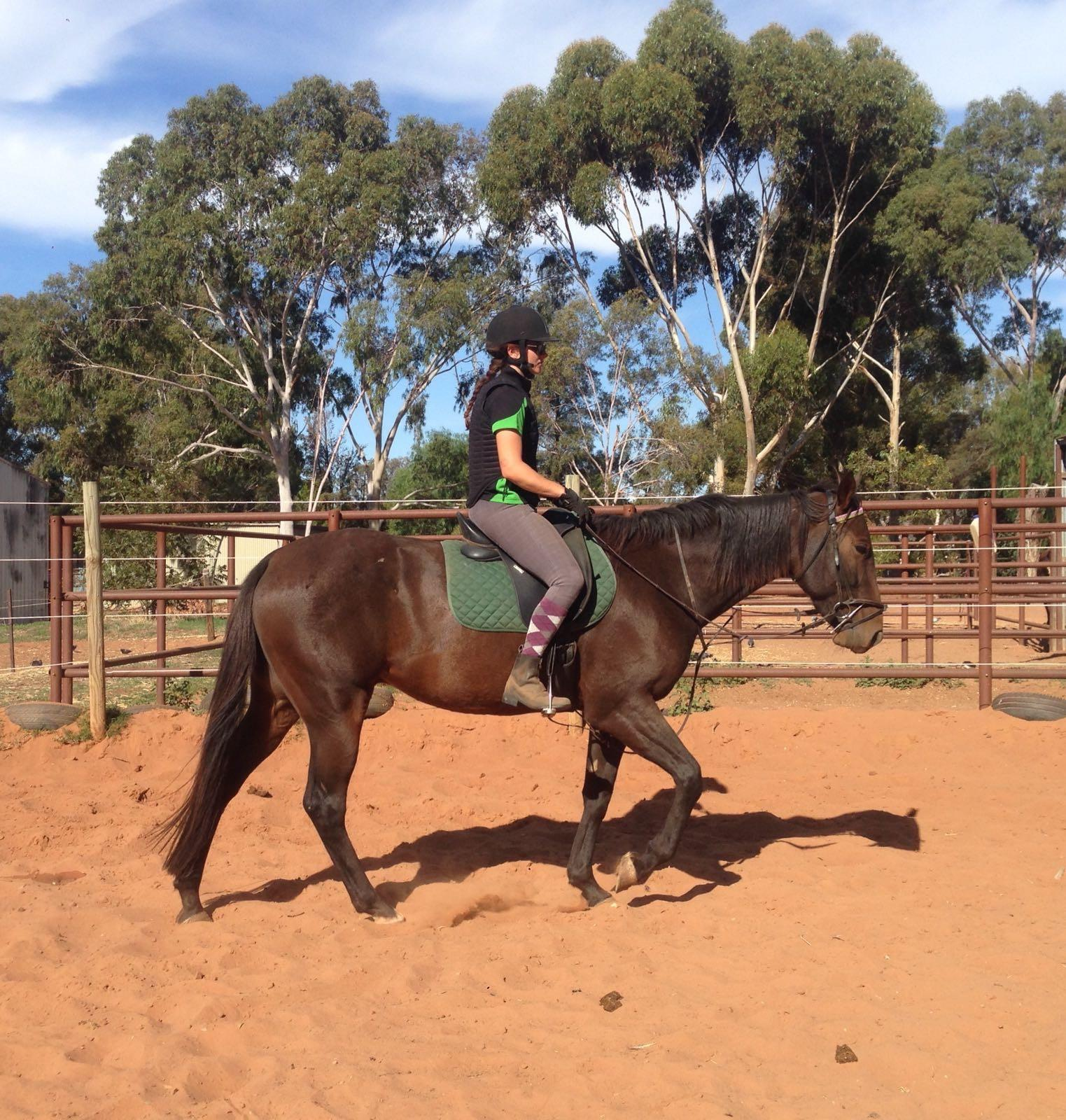 Beginner Friendly with Stunning Canter