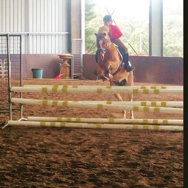 Safe Dream Showjumping and Performance Pony