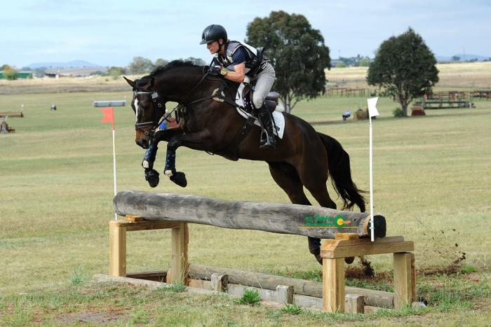 Gorgeous Thoroughbred 8yo 16.1hh Broodmare