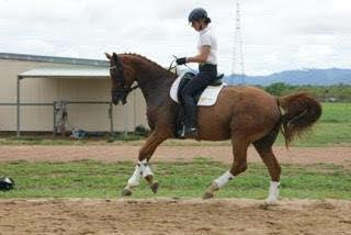 Beautiful Dressage Warmblood Mare