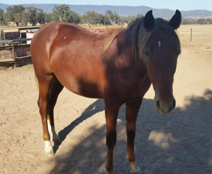 ASH Yearling Colt