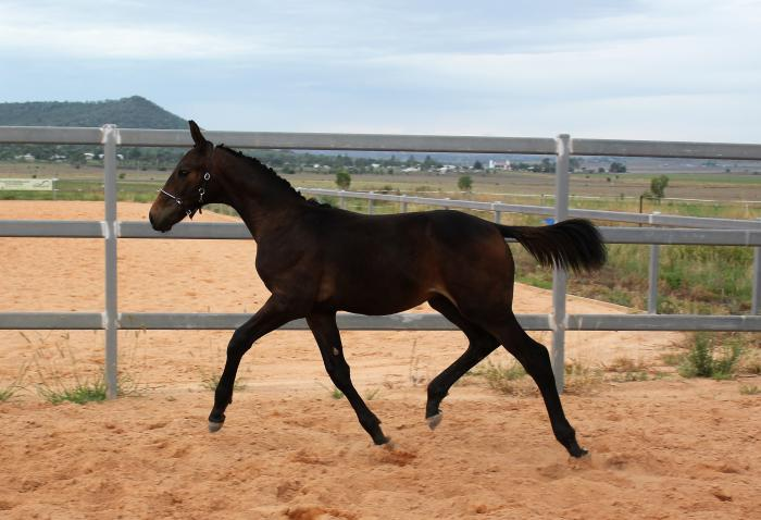 Check In - Espri Embryo Transfer Colt