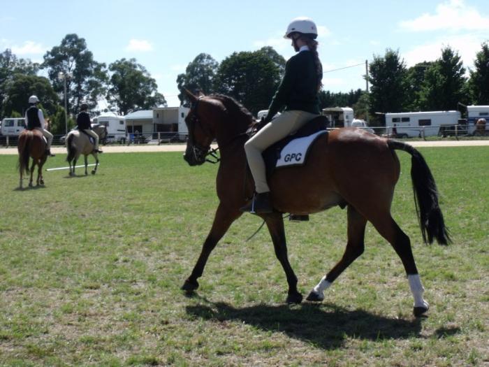 Welsh type pony gelding