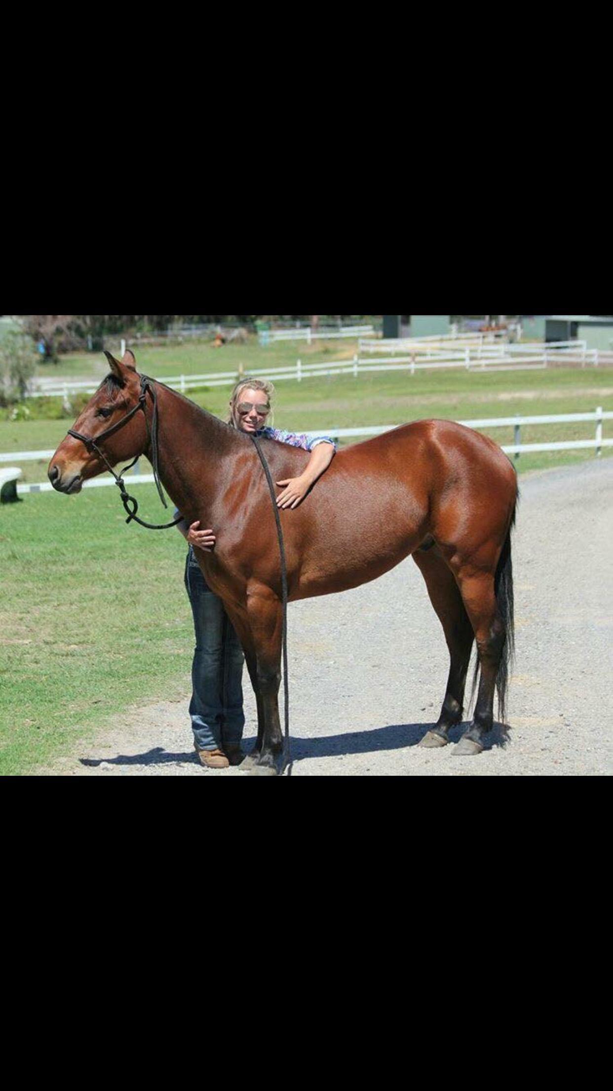 Beautiful registered quater horse gelding