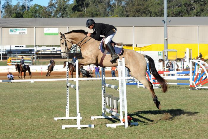 Striking WB x TB Buckskin, with amazing jump