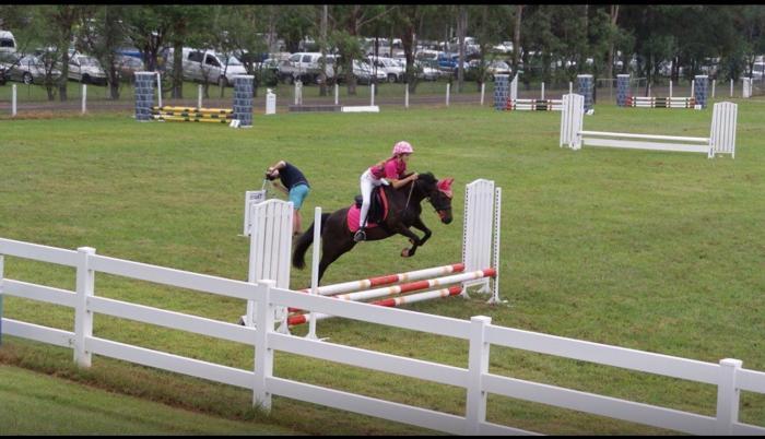 Ultimate Pony Brown/ Black 13h 12years.