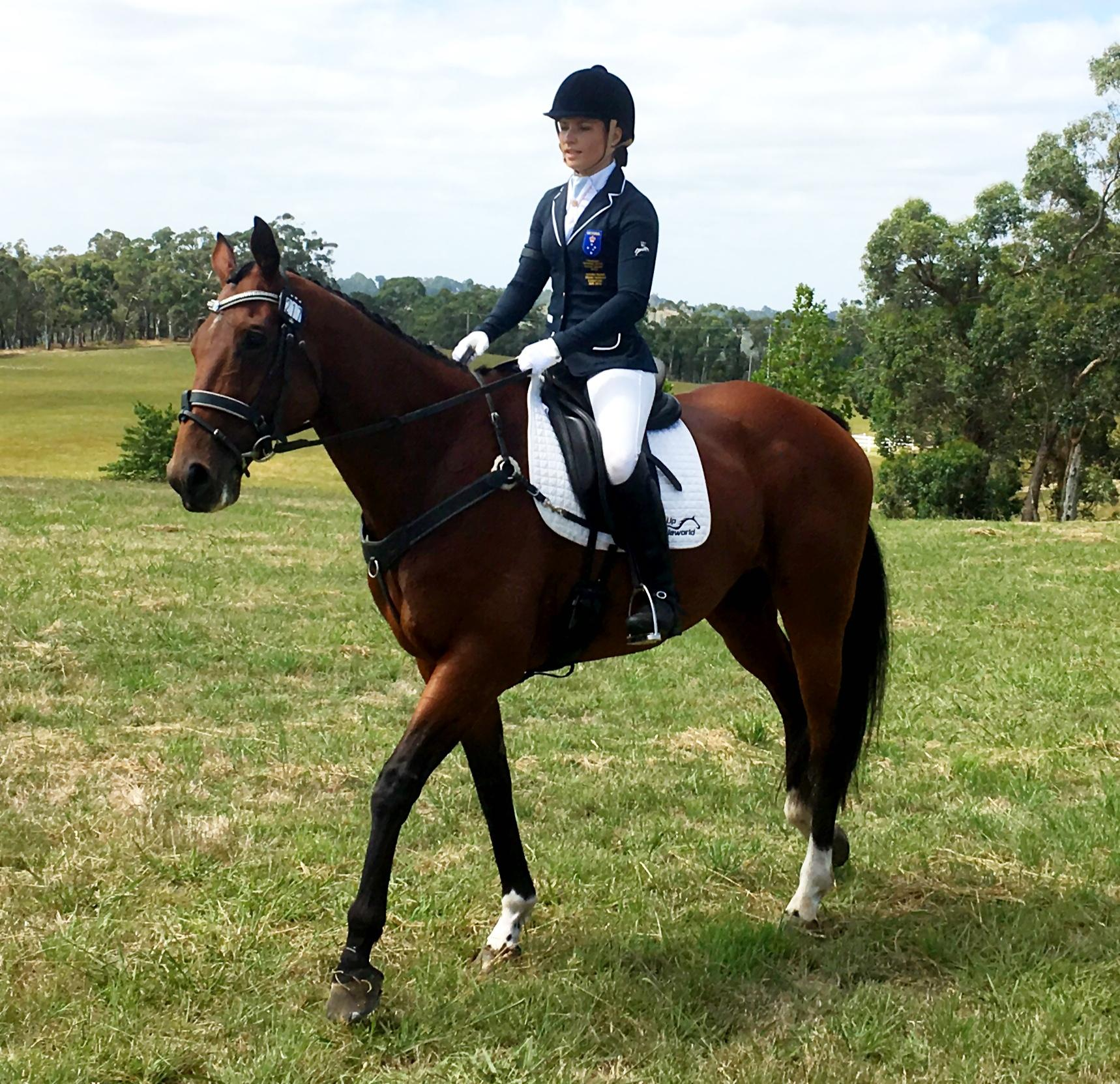 Honest stress free eventer that ANYONE can ride