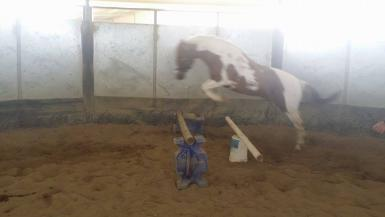 Sparky jumping