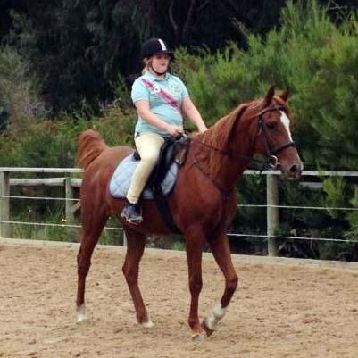 Quiet Arabian Gelding