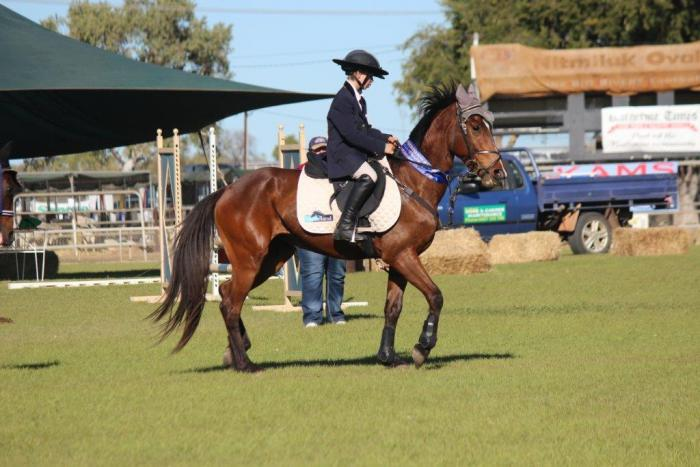 Magnificent Jumping Pony - Super Talented