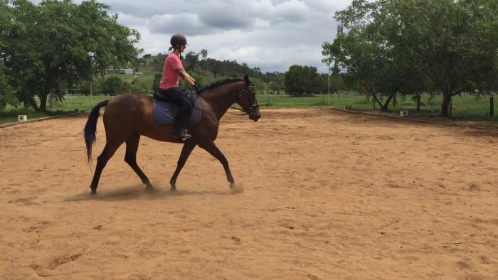 Stock Horse x QH by Abby Chan