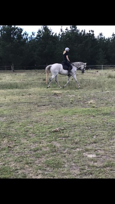 Good home only for 17hh companion
