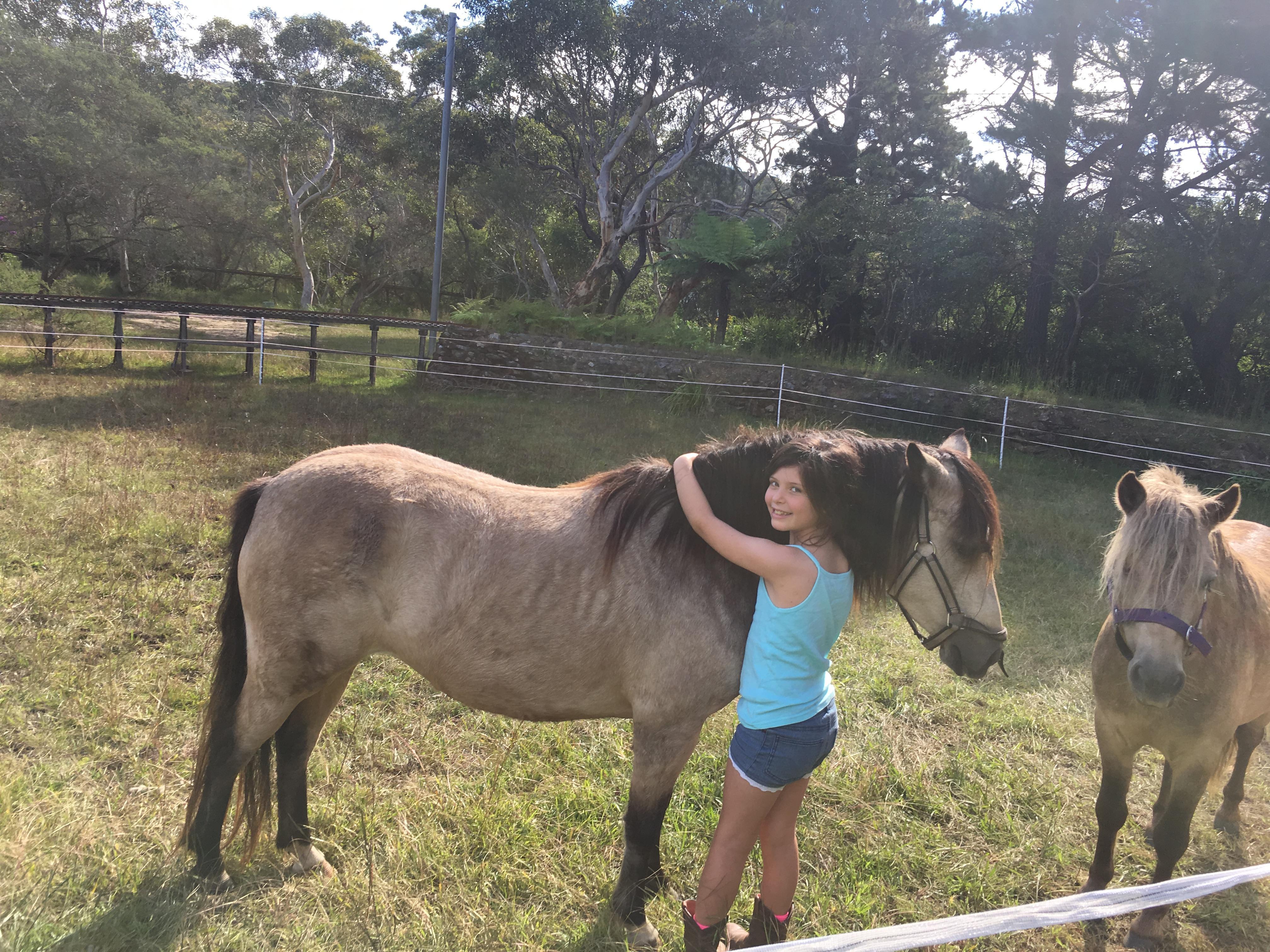 Buckskin pony mare