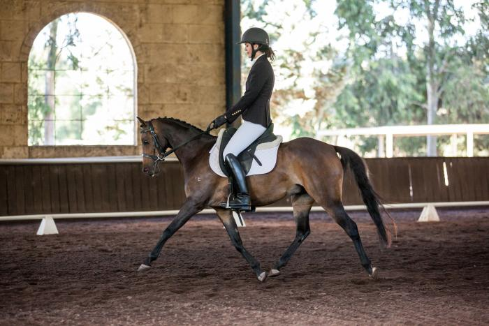 Talented young riding pony