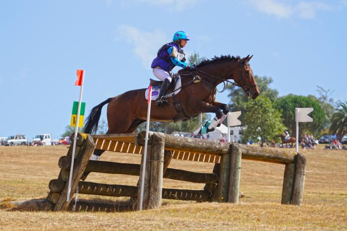 Experienced Eventing schoolmaster