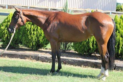 Starelle Sapphire - Stunning competition mare