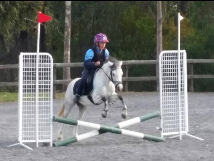 12.3hh welsh c pony