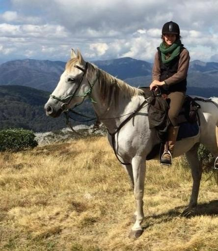 Solid Grey Gelding QH - Great Trail or Adult Rider