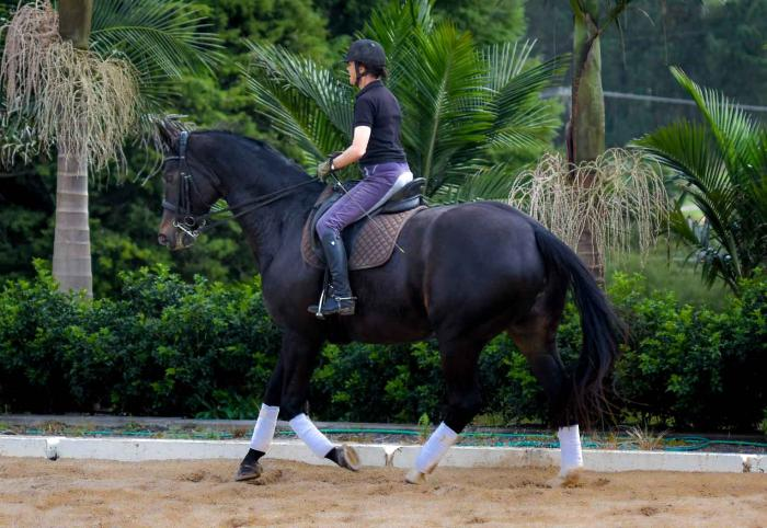 Beautiful black Advanced/Prix St George mare