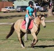 Stunning QUIET registered buckskin NO VICES