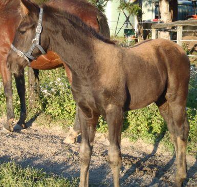 Starnberg Foal 2012