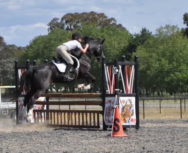 Canberra Showjumping Cup November 2015 70cm: 5th place