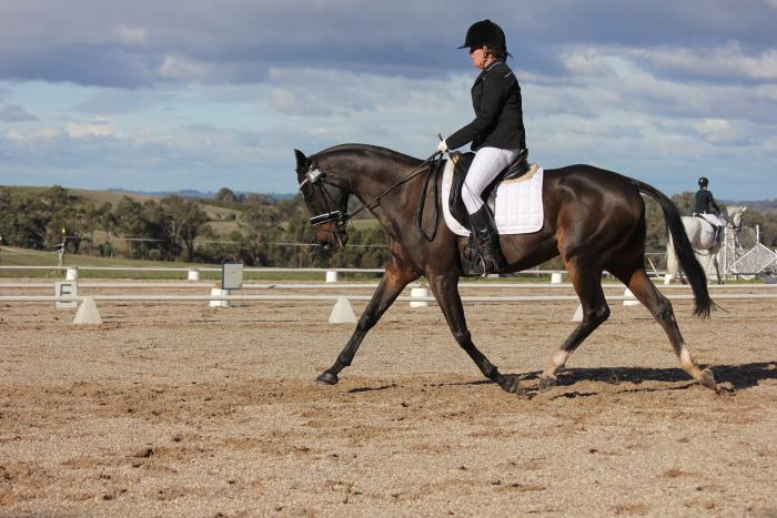 Talented Dressage Competitor