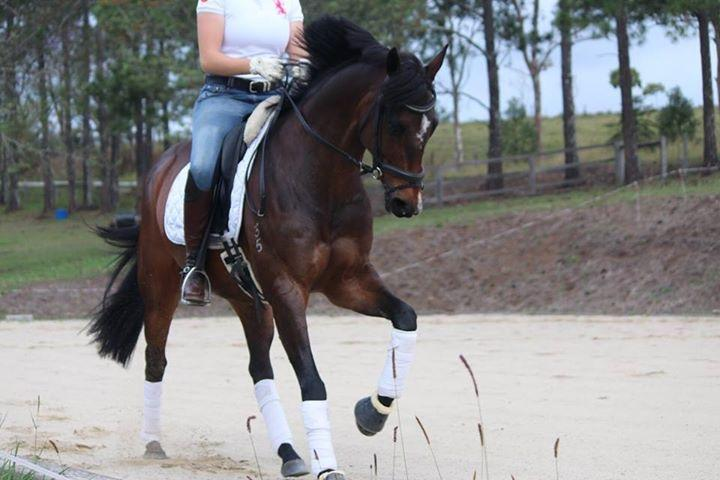 Flashy dressage RPx