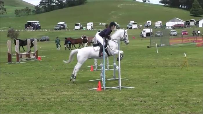 Australian Riding pony- Competitive Showjumper