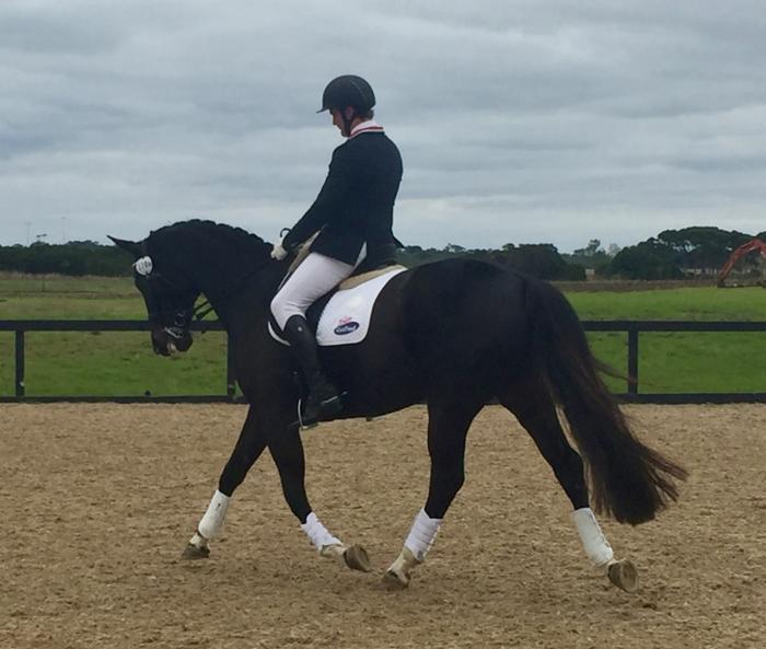 Dressage Performance Mare