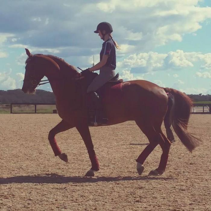 Easy going pleasure/AR gelding