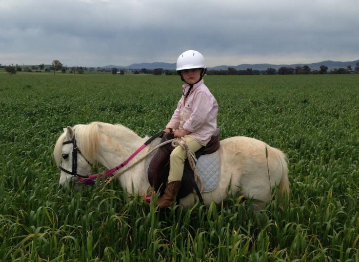 Australian Riding Pony - Mare 11.1hh