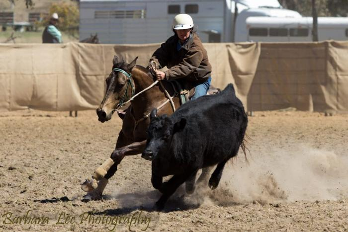 Novice Campdraft Gelding