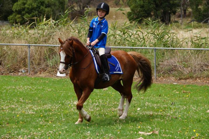 Welsh Pony Gelding 12.2hh