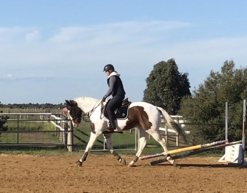 5yo warmblood x TB