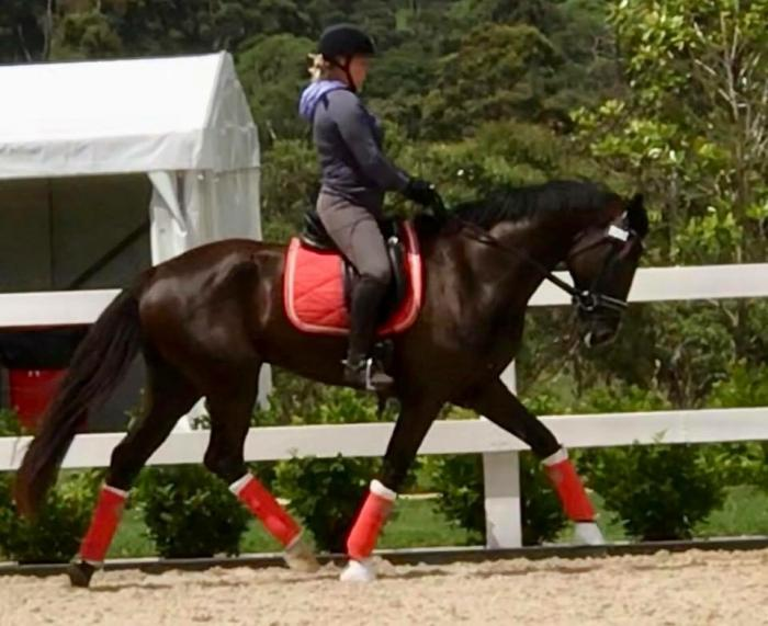 Outstanding Young Dressage Horse