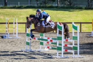 Top Performance Pony for sale