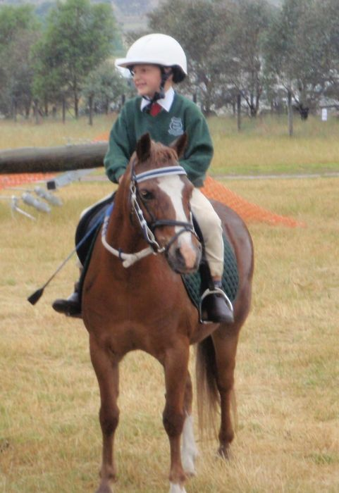 Excellent Beginners Pony