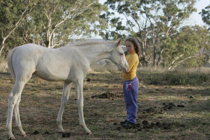Rare triple registered & coloured colt