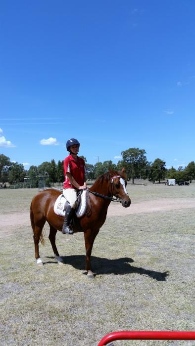 Dressage Pony 13.1 hands