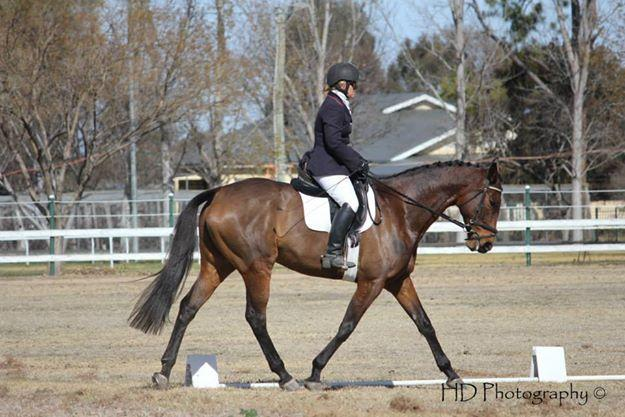Big TB mare