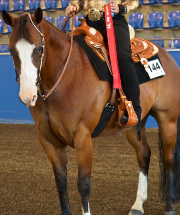 """Alamo pleasure saddle 16"""" made in  Texas USA"""