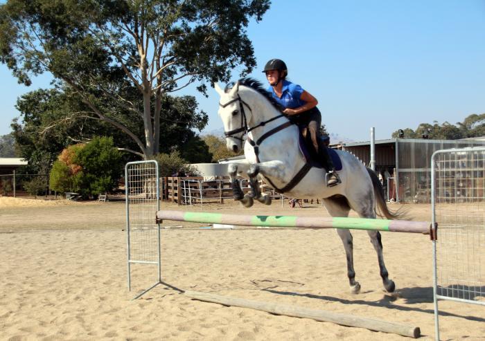 Quiet allrounder - loves to jump!