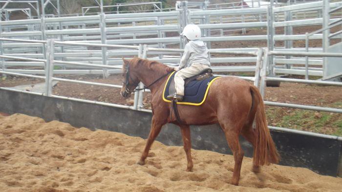 Royal quality childs pony