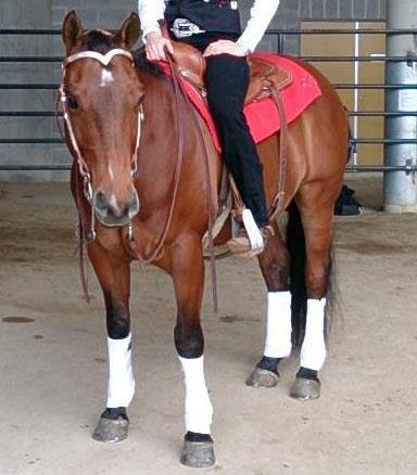 Ultimate Quarter Horse Gelding