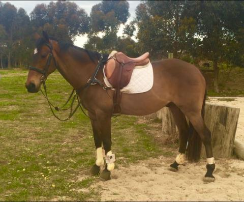 Great Allrounder for Experienced Teen/Small Adult
