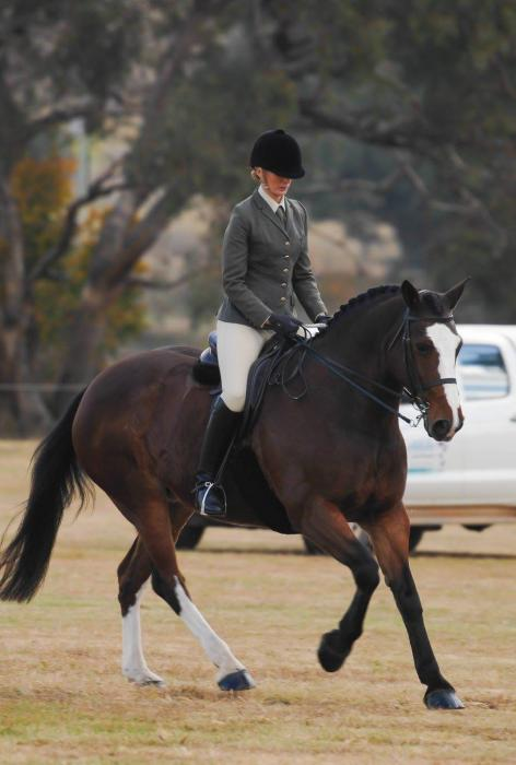 Magnificent Hunter / Dressage Mare