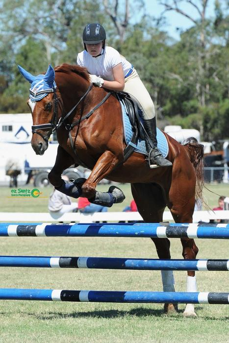 Jumper or Eventing Mare