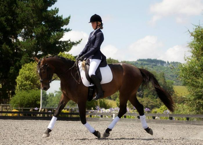 Dressage mare with phenomenal movement